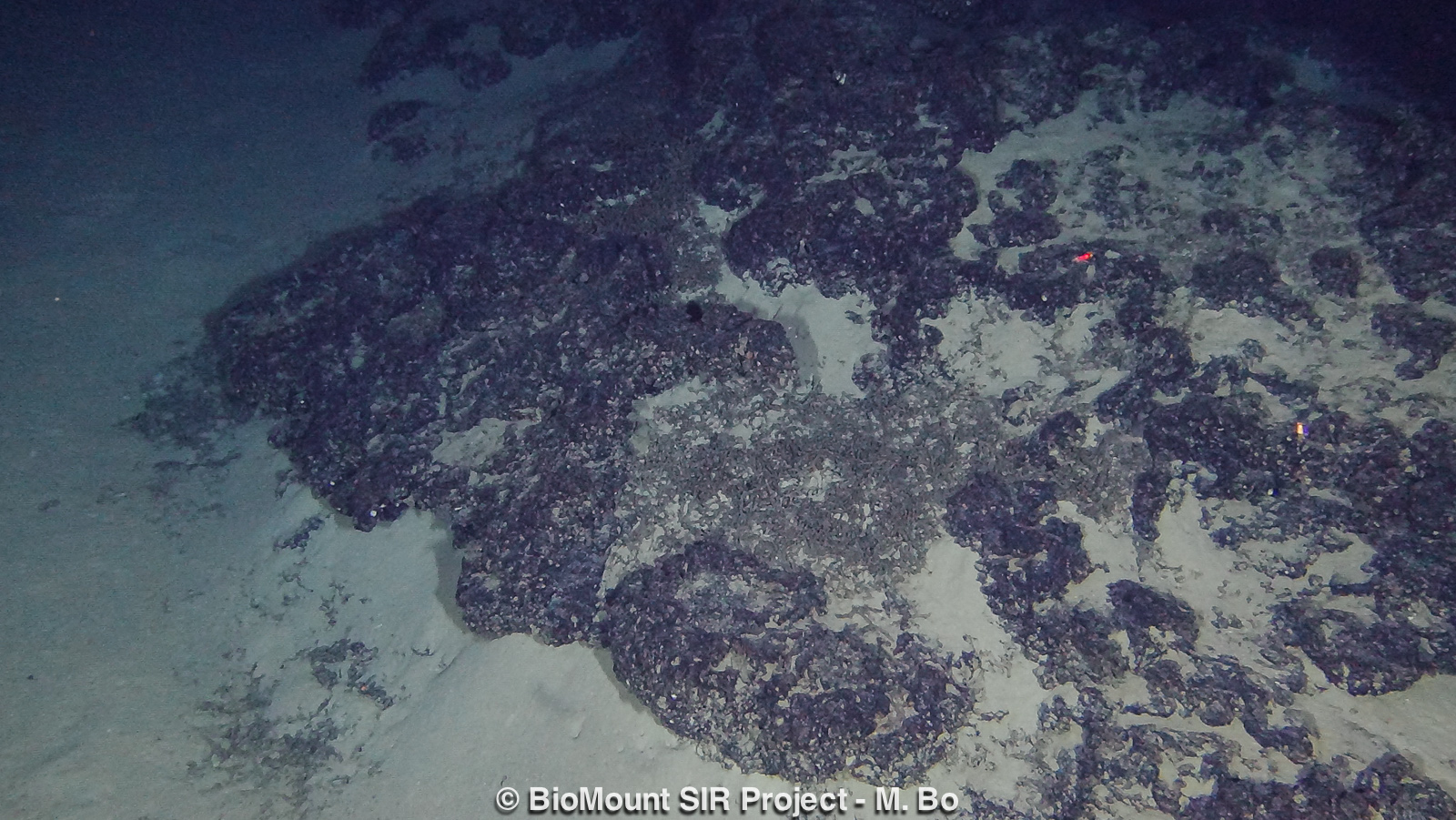Rocky seafloor covered in Fe-Mn and with a Lophelia pertusa tanatocoenosis.