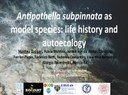 Antipathella subpinnata as a model species: life history and autoecology