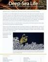 BioMount Project: unveiling deep biodiversity of Mediterranean Seamounts