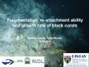 Fragmentation, re-attachment ability and growth rate of black corals